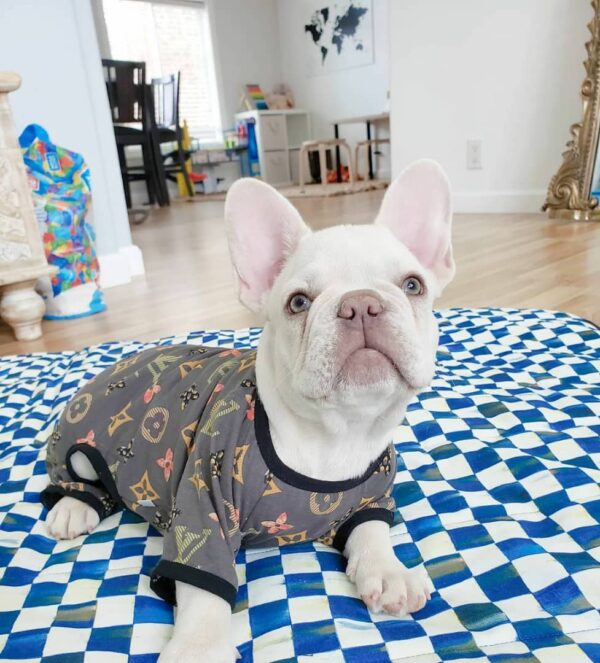 how much is a french bulldog